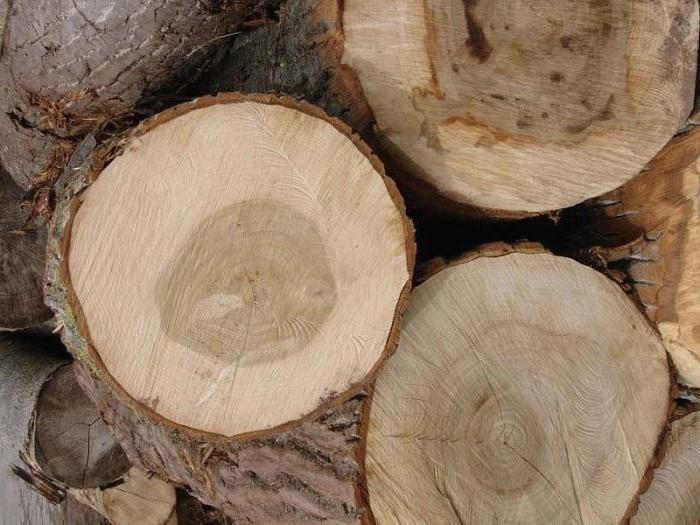 Caracteristicas de las maderas blandas